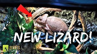 Download A New Lizard | Newest UPDATE on the Antiverse Video