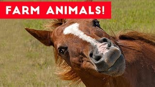 Download The Funniest Farm Animals Home Video Bloopers of 2017 Weekly Compilation | Funny Pet Videos Video