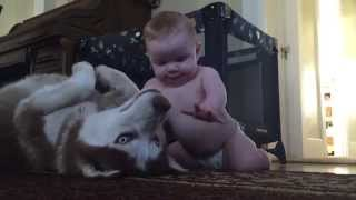 Download Baby and dog show love for one another Video