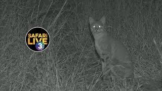 Download safariLIVE on SABC 3 S2 - Episode 7 Video
