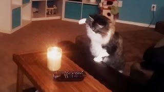 Download Curious Cats vs. Candles Compilation Video