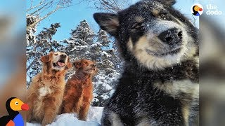 Download Dogs And Their Dad Go On So Many Adventures In Alaska | The Dodo Video