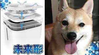 Download 機能が凄すぎる!?超ハイテク!!犬猫用浄水機能付き給水機!! Video