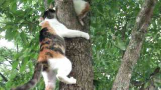 Download Mama Kitty's Rescue Video