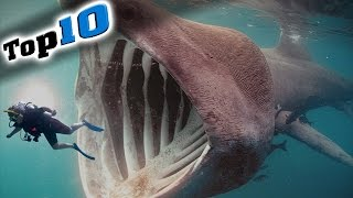 Download Top 10 Most Dangerous Animals in the World! Video
