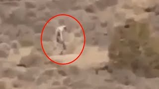 Download 5 Mysterious Creatures Caught On Camera & Spotted In Real Life! #2 Video