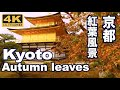 Download [4K]KYOTO JAPAN 美しい京都の紅葉 More beautiful Kyoto autumn in the world 京都観光 日本の紅葉 Video