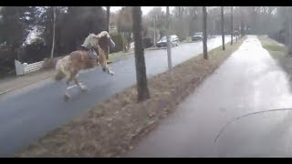 Download Scooterdriver helps woman catch her runaway horse Video