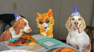 Download Evil Cat Ruins Dog Party! Funny Dogs Maymo, Penny & Potpie Video