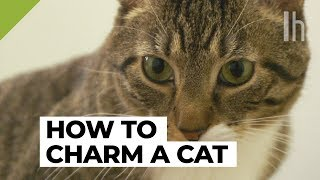 Download How to Get a Cat to Like You | Lifehacker Video