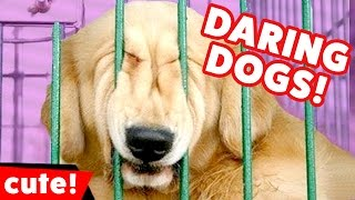 Download Daring Dogs and other Escaping Animals Weekly Compilation 2016 | Kyoot Animals Video