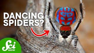 Download 9 Amazing New Arachnid Species Video