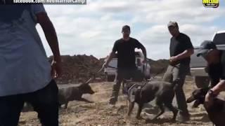 Download Violence Erupts at Standing Rock Reservation Video