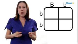 Download GED Science Unit 4.5: Using a Punnett Square Video