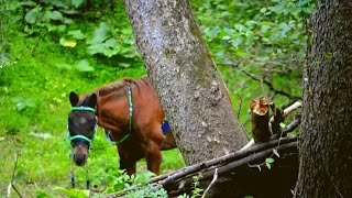 Download Hikers Found This Horse Alone in the Woods. Then They Looked At His Face and Realized… Video