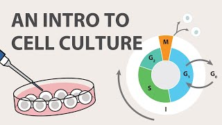 Download 1) Cell Culture Tutorial - An Introduction Video