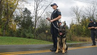 Download Police Dog: Training your best friend Video