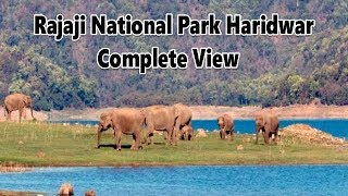 Download Rajaji National Park Haridwar Uttrakhand Safari Jeep Video