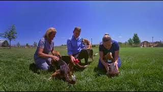 Download Hill's Pet Nutrition Center Virtual Tour: A Dog's Eye View Video