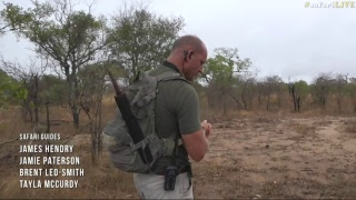 Download safariLIVE - Sunrise Safari - Nov. 08, 2017 Video