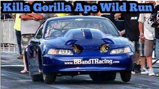 Download Killa Gorilla Ape Wild Run at Armageddon No Prep!! Video