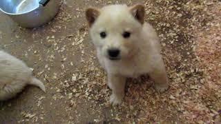 Download 子犬保護 Video