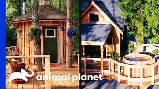 Download Super Chill Sauna vs. Hot Tub Rumpus Room!   Treehouse Masters Video
