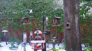Download Birds in our backyard Video