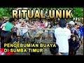 Download Paling Unik Sedunia... ritual upacara adat penguburan seekor buaya pemakan manusia! Video