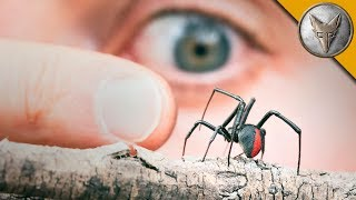 Download MORE DANGEROUS than a Black Widow?! Video