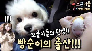 Download (긴급영상!) 빵순이의 출산!!! 꼬물이들의 탄생 ♥ [소근커플 S.K.Couple] [ENG JPN SUB] Video
