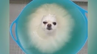 Download DO NOT play TRY NOT TO LAUGH, it's so HARD YOU WILL DIE TRYING! - Funniest ANIMAL videos Video