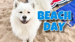 Download My Dog Goes To The Beach! Video