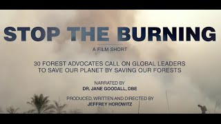 Download STOP THE BURNING - 30 global leaders send a collective message to end deforestation Video