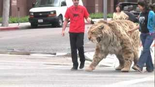 Download Saber-toothed cat struts down Wilshire Blvd in L.A. and comes home to the Tar Pits! Video