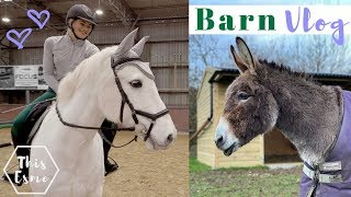 Download Jumping Lesson + Donkey Stable Cleaning | Barn Vlog | This Esme Video
