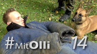 Download Mit Olli - in der Diensthundeschule - Bundeswehr Video