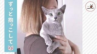 Download 抱っこされてご満悦の表情の猫さん、でも降ろされてしまって…【PECO TV】 Video