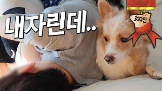 Download 강아지가 인형한테 아빠 품을 뺏겼어요.. Video