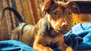 Download A DOG'S WAY HOME - First 10 Minutes From The Movie (2019) Video