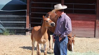 Download Touching a Foal that ″can't″ be Touched Video