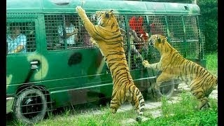 Download Gazipur Bangabondhu Safari Park.. Video