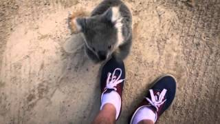 Download The moment this baby koala climbs up and cuddles cameraman Video