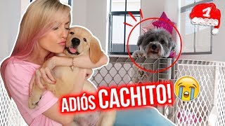 Download DEJÉ DE QUERER A CACHITO?! 💔🐶 VLOGMAS #1 Video