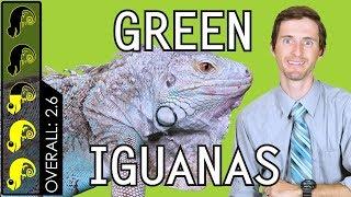 Download Green Iguana, The Best Pet Lizard? Video