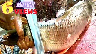 Download Live fish cutting skills 2019 in fish market | fastest Rohui fish cutting. Video