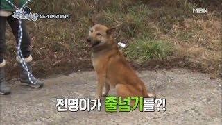Download '커플 줄넘기' 하는 개, 본 적 있으세요? [현장르포 특종세상 249회] Video