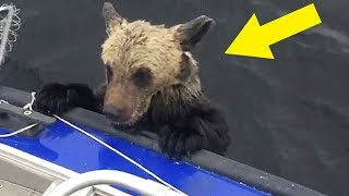 Download When Guy Realized Why Bears Were Climbing On His Boat, It Was Almost Too Late To Escape Alive Video
