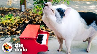 Download Rescue Pig Runs Wild At The Park | The Dodo Airbnb Experiences Video
