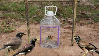 Download Simple Bird Trap Technology Make from Bottle Drop down in Hole - Very easy bird trap Video
